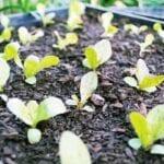 Siembra de verano: cosechas continuas durante todo el verano y otoño