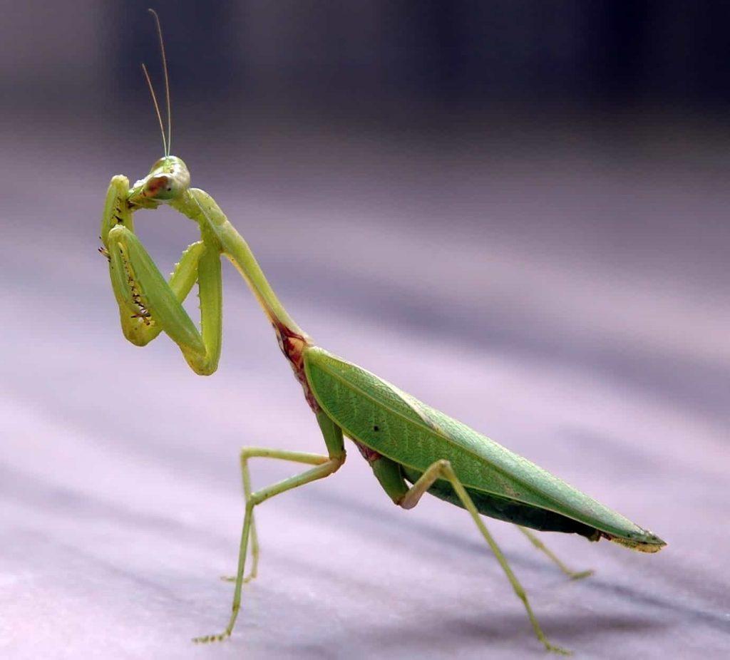 Siete insectos que benefician a tu jardín ⋆ Gran blog de jardinería