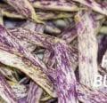 Sobre Feijão |  Datos sobre los frijoles - West Coast Seeds