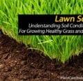 Suelo del césped - Comprensión de las condiciones del suelo para cultivar césped y césped saludables -