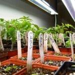 Luces de cultivo T5 - guía y comprar mejores luces de cultivo