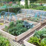 Tareas de jardinería para enero