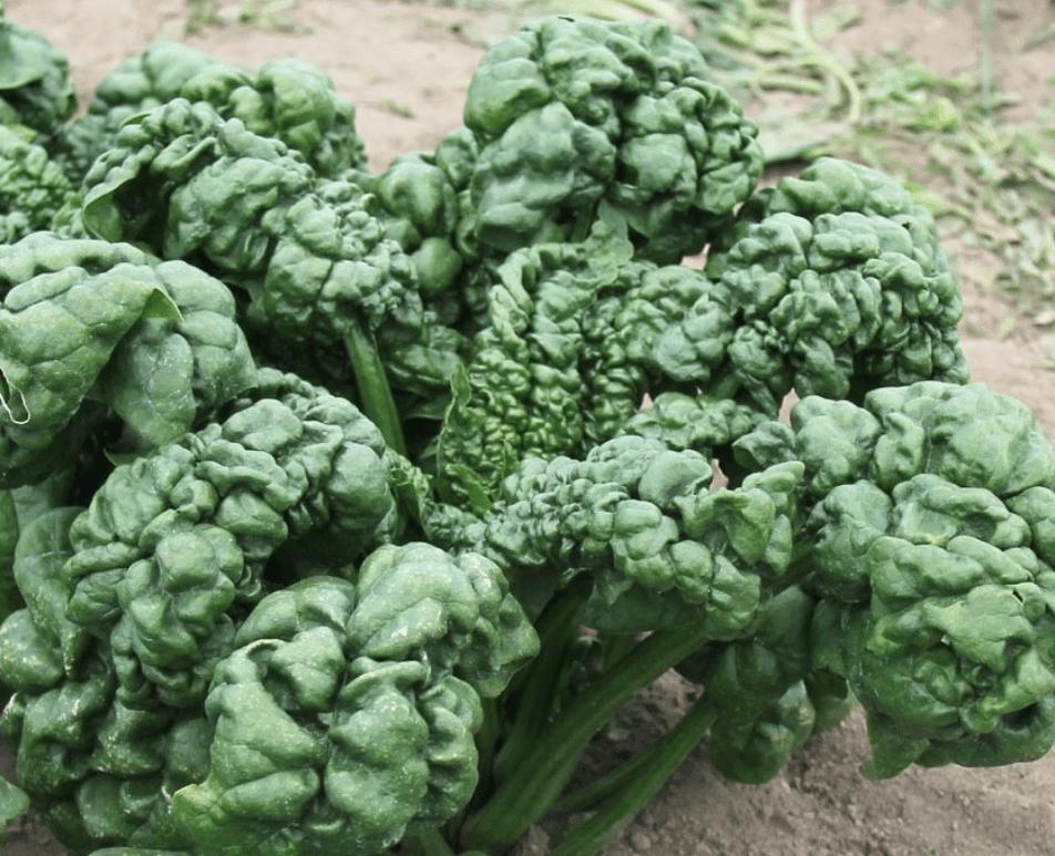 Tareas y recursos del jardín de principios de otoño