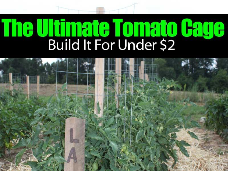 ultimate-tomato-cage-083114