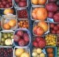 Tomates desvalidos |  Intercambio de semillas de exposición al sur
