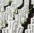 Tomates iniciales en interiores - instrucciones de West Coast Seeds