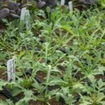 Tornillos para hortalizas - Estiercoles.com