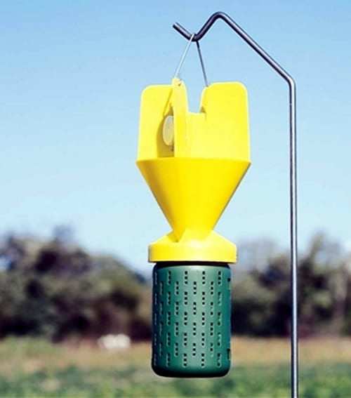Japanese Beetle Traps - Do They Work in the Garden?
