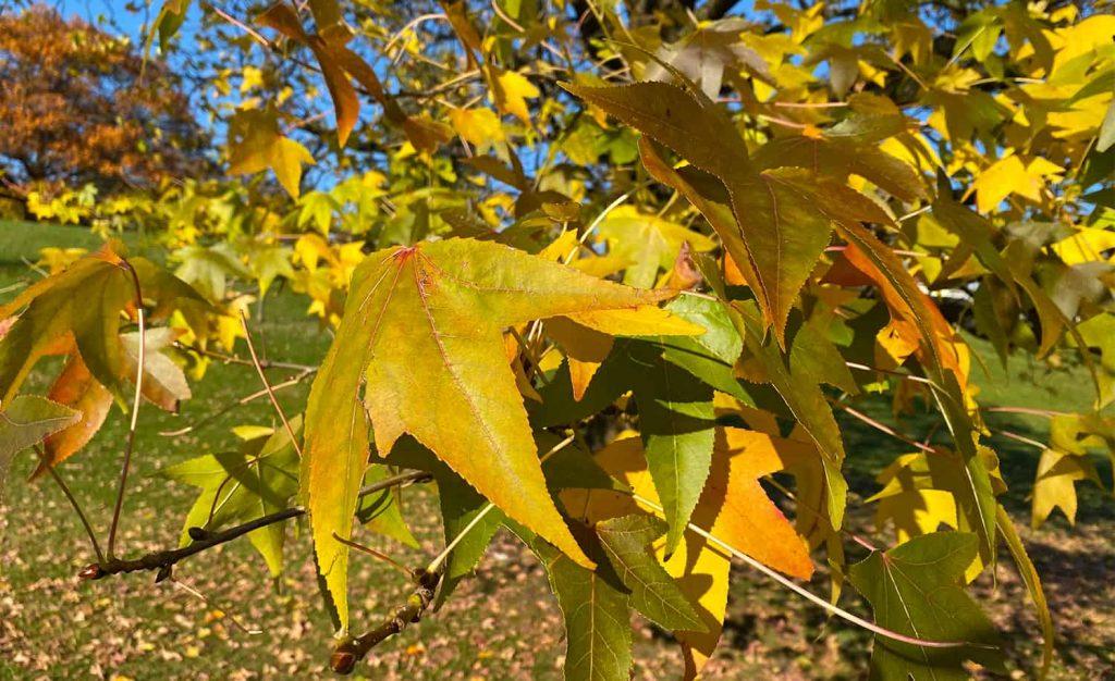 Transforma las hojas de los árboles en abono, mantillo y fertilizante orgánico ⋆ Great gardening blog