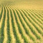 USDA comenta sobre la coexistencia agrícola
