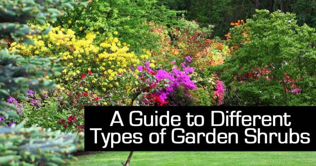 planting of different garden shrubs