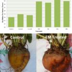 Uso de microbios para mejorar el rendimiento de los fertilizantes