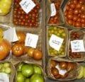 Variedades de tomate: encontrar la semilla de tomate adecuada