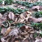 Verduras frescas para cosechar de otoño a invierno