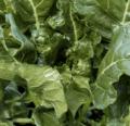 Verduras tolerantes al calor para probar este verano