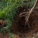 Acerca de plantar árboles de raíz desnuda: consejos para plantar raíz