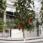 Jardinería aeropónica: cómo crear un sistema aeropónico para plantas