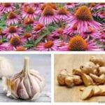 Agregar alimentos antivirales naturales a los jardines