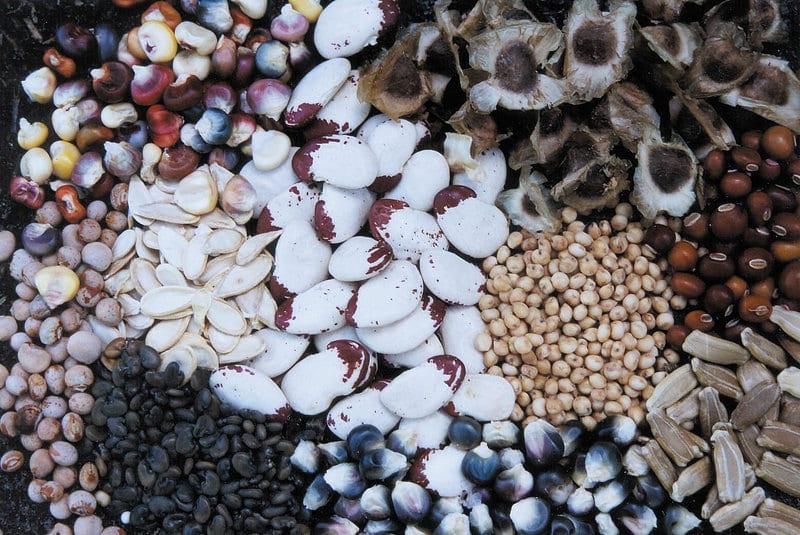 Almacenamiento de semillas para ahorro de semillas a largo plazo