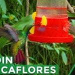 Atrayendo colibríes al jardín