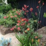 Australia Garden Design - Cómo cultivar un jardín australiano