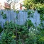 Ideas agrícolas en el patio trasero en la ciudad