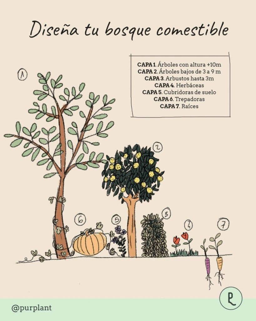 Beneficios del Jardín Bosque Comestible