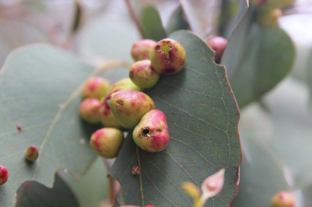 Golpes en las hojas: ¿cómo se ve la cría de hojas y cómo tratarla?