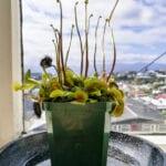Plantas en macetas de riego inferior: cómo regar las plantas de la parte inferior
