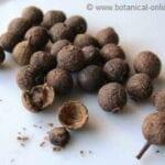 Can You Grow Allspice - Información sobre el cultivo de hierbas de pimienta de Jamaica