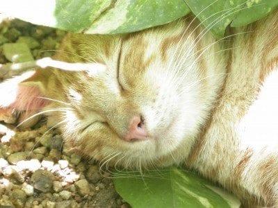Plantas aptas para gatos para jardines: cómo hacer jardines seguros para gatos