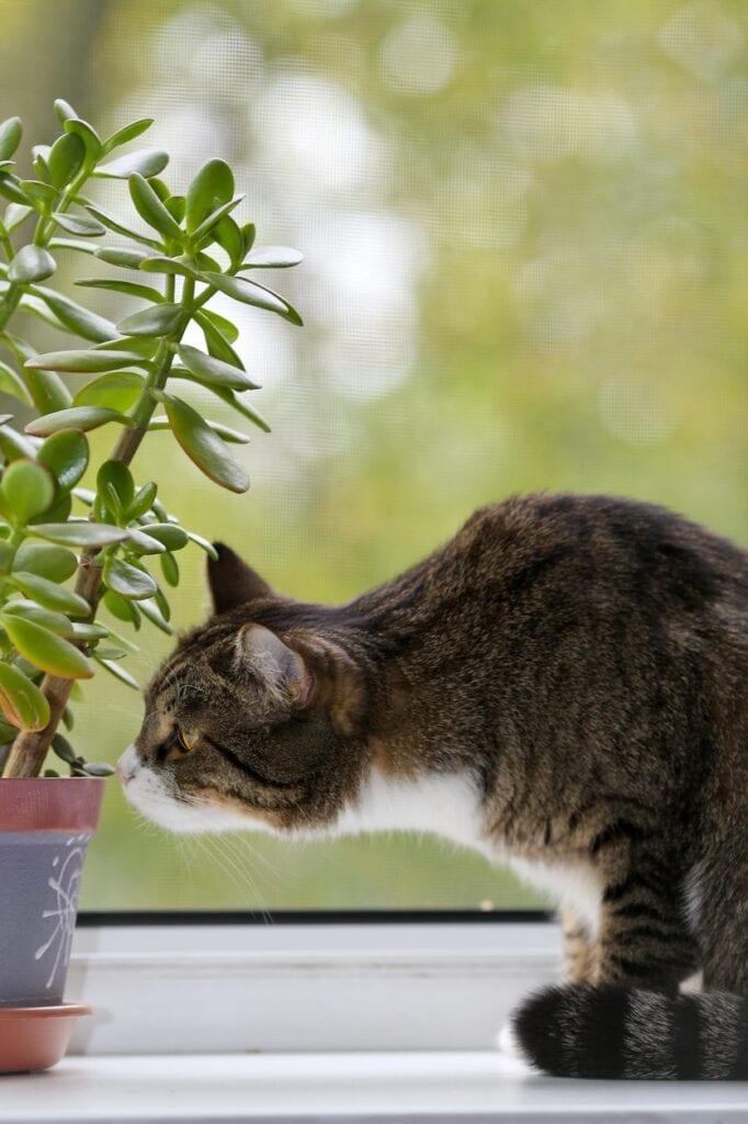 ¿Hay plantas de interior? Los gatos se irán solos