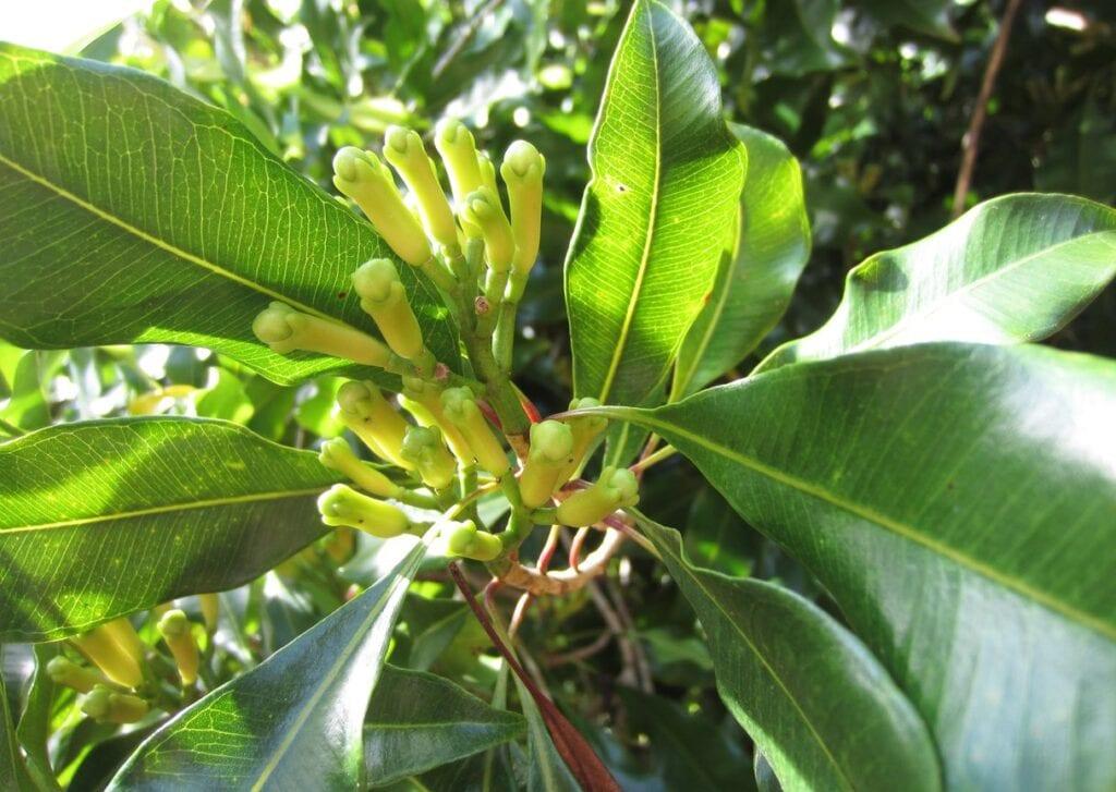 ¿Puedes cultivar un árbol de amor?