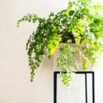 Plantas de interior tolerantes al frío - Plantas de interior de invierno para cuartos fríos