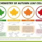 Color de hoja de otoño: razones para el cambio de color de hoja en otoño