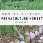 Cómo desarrollar la permacultura Homestead en Fases