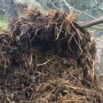 Compost de estiércol de alpaca: ¿cómo uso el estiércol de alpaca como fertilizante?
