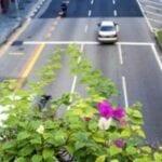 Contaminación por jardinería urbana: cómo corregir la contaminación en un jardín de la ciudad