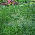 Control de la hierba de las Bermudas: cómo deshacerse de la hierba de las Bermudas pero no de las plantas