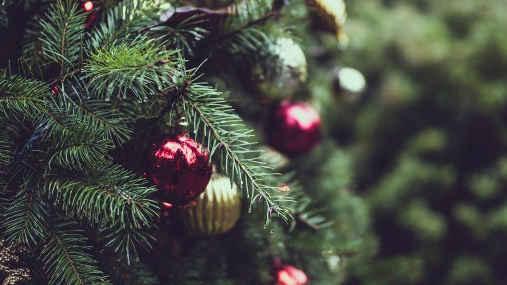 Cuidando un árbol de Navidad en vivo