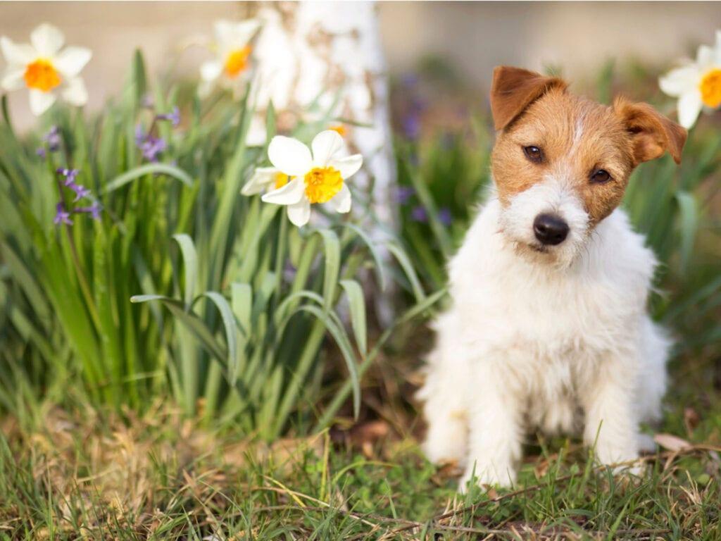 5 consejos para mantener a un perro fuera del jardín