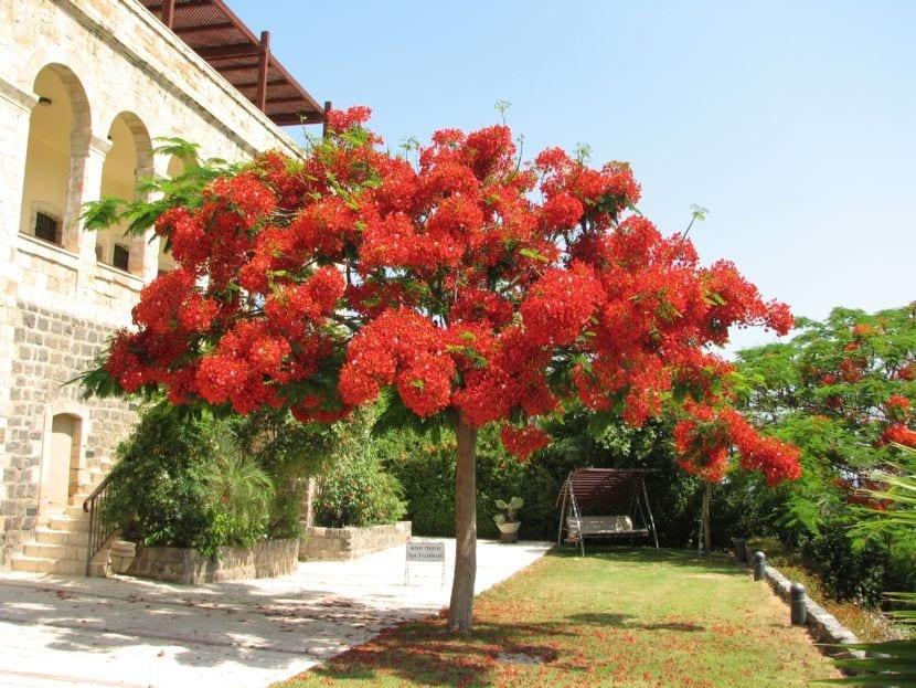Elección de pequeños árboles ornamentales para sombra