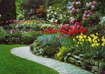 Elección de plantas de jardín coloridas: consejos para agregar color en el jardín