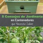 Elegir el mejor contenedor para jardinería