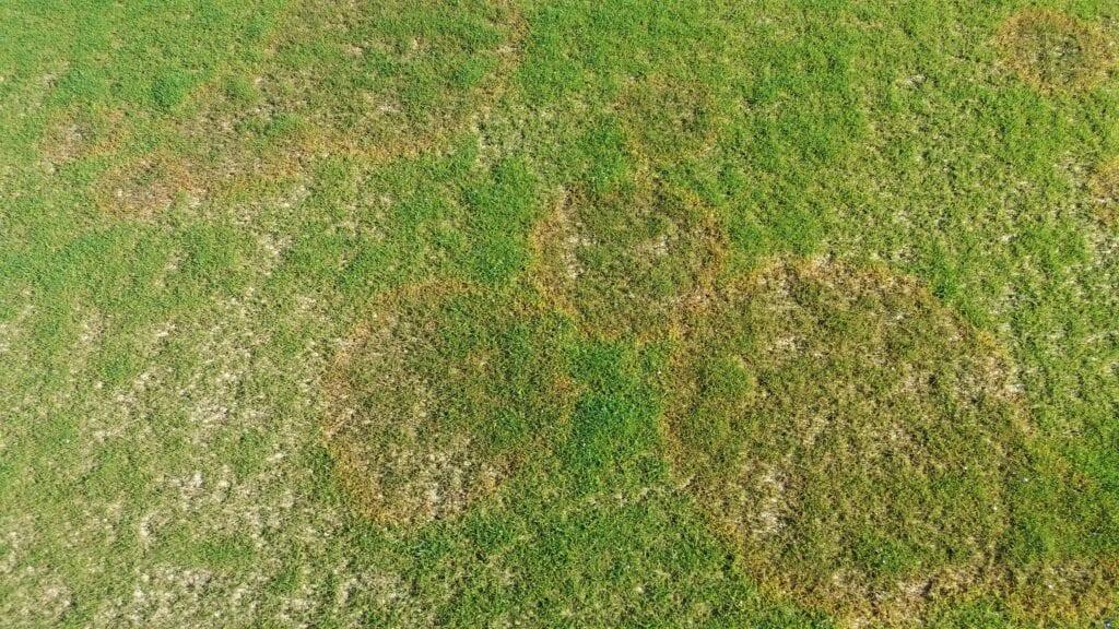 Enfermedades comunes de la hierba: consejos para controlar los problemas del césped