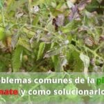 Enfermedades comunes de las plantas de tomate