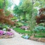 Escaladas anuales para jardines sombreados - Creciente vides anuales en la sombra