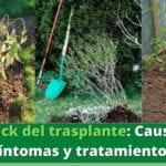 Evitar y reparar el choque de trasplantes en plantas