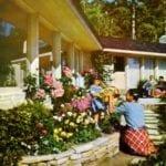 Diseño de jardín inspirado en la década de 1950: consejos para crear un jardín vintage de los 50