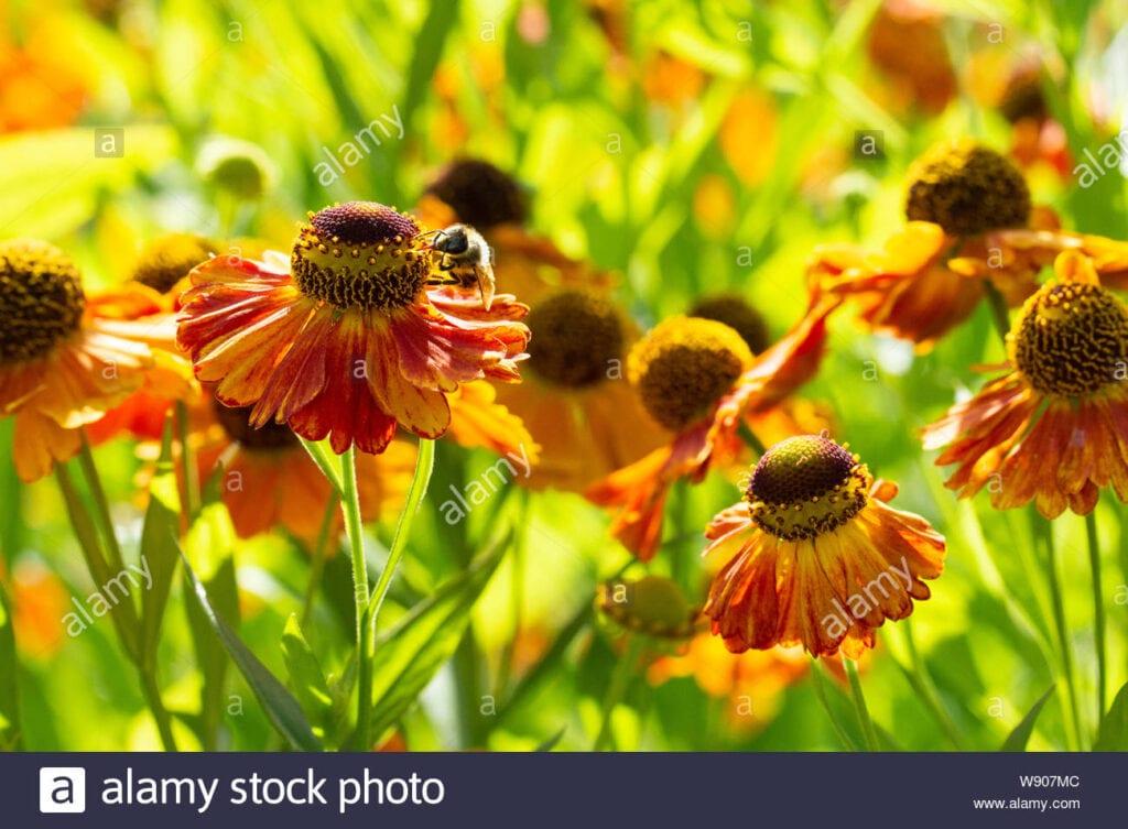 Flores de Blooming de otoño para las abejas